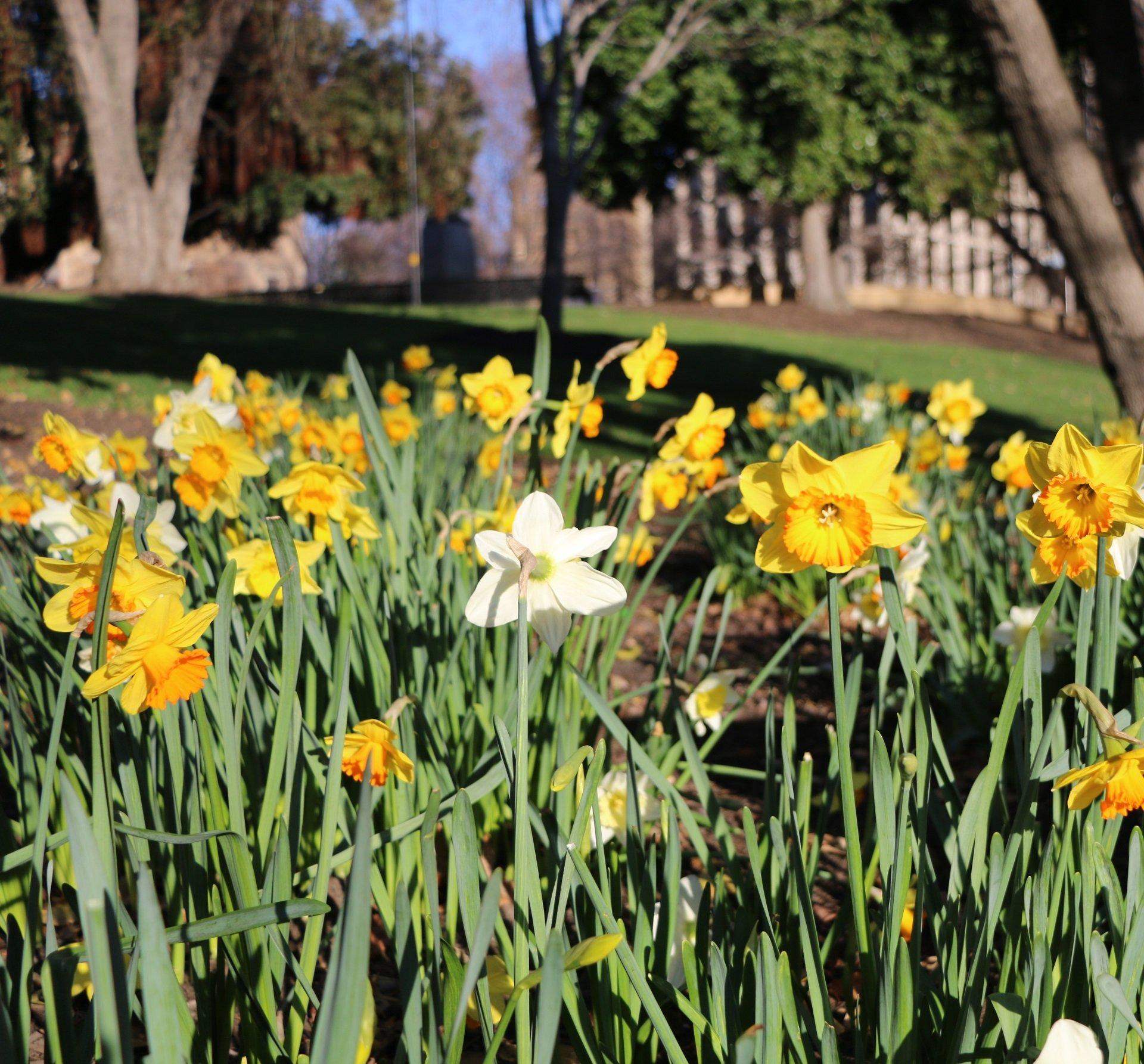 Spring-background-image-2