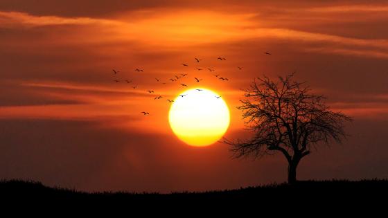 Blog image sunset-01.png